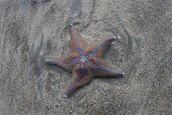 July 21, 2019 - Starfish On Beach (Credit Image: © Deddeda/Design Pics via ZUMA Wire)