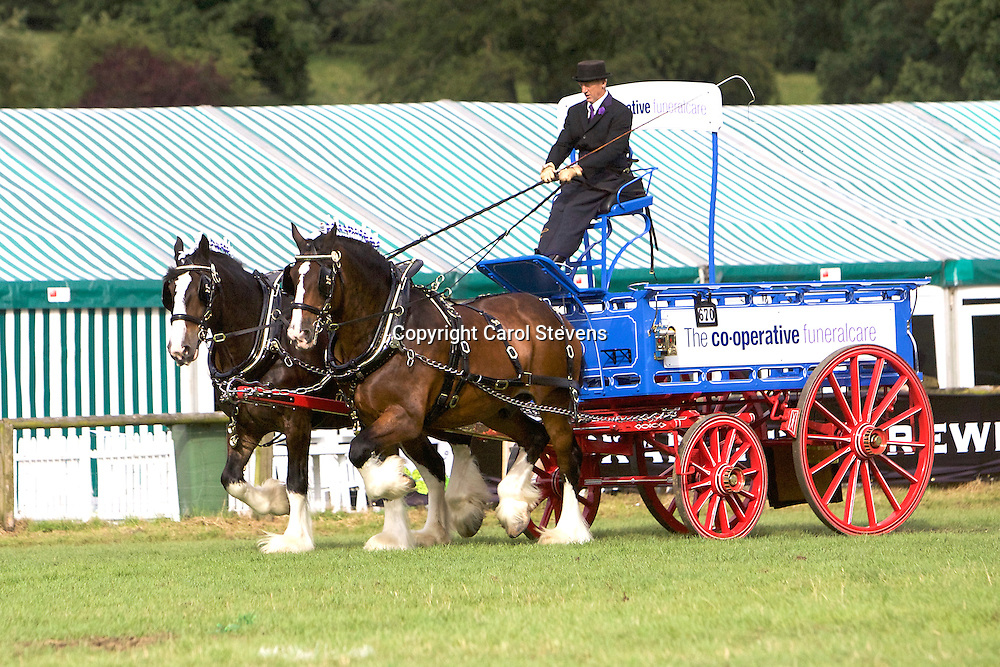 John Goodwin driving his own Shires<br /> Winner  Pairs Turnouts