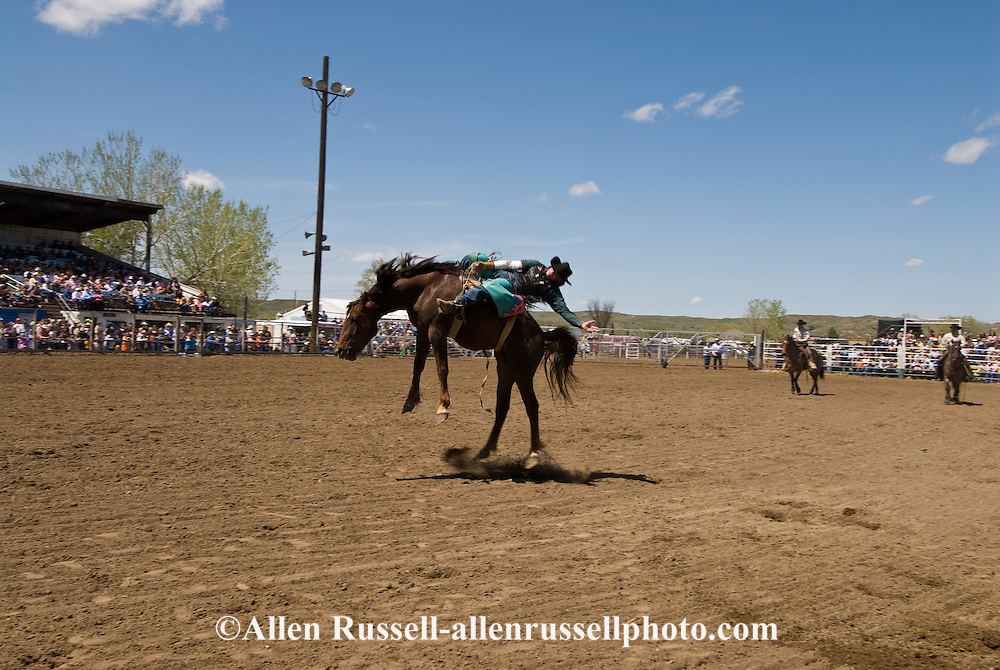 Rodeo, Bareback Bronc rider, Miles City Bucking Horse Sale, Montana, <br /> MODEL RELEASED on rider &amp; pickup men