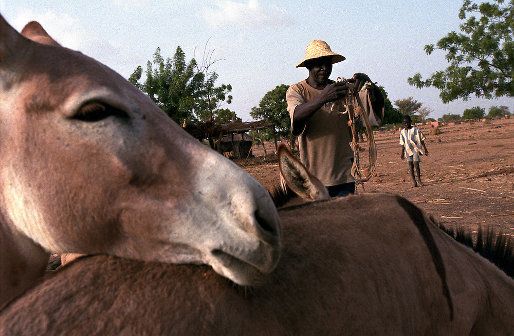 A farmer at his home harnesses a mule to prepare his fields for planting before the arrival of the rainy season..Tanlili, Burkina Faso. 07/06/2004.Photo © J.B. Russell