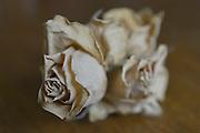 Nederland, Ubbergen, 14-2-2013Een uitgedroogde, verwelkte, gele roos.Foto: Flip Franssen