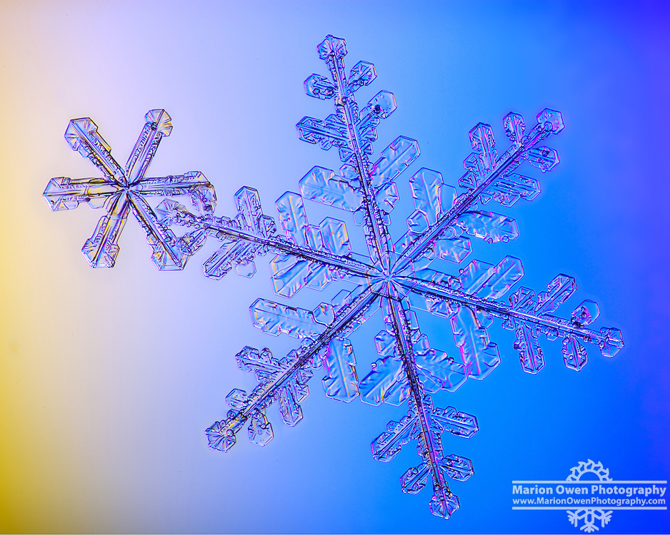 Real snowflakes cling together and then photographed in Anchorage, Alaska