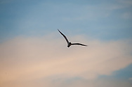 A bird flies as the sun sets Thursday, July 18, 2019 on the Delaware Bay in Villas, New Jersey. (Photo by William Thomas Cain/CAIN IMAGES)