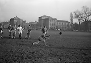 Irish Rugby Football Union, Ireland v France, Five Nations, French team practice at College Park, Dublin, Ireland, Friday 22rd January, 1965,.22.1.1965, 1.22.1965,..Referee- D G Walters, Welsh Rugby Union, ..Score- Ireland 3 - 3 France, ..French Team, ..P Dedieu, Wearing number 15 French jersey, Full Back, A S Biterroise Rugby Football Club, France,. .J Gachassin, Wearing number 11 French jersey, Left Wing, F.C Lourdais Rugby Football Club, France, ..G Boniface, Wearing number 12 French jersey, Left Centre, Stade Montois Rugby Football Club, France,..J Pique, Wearing number 13 French jersey, Right Centre, S Paloise Rugby Football Club, France,..C Darrouy, Wearing number 14 French jersey, Right Wing, Stade Montois Rugby Football Club, France,..J Capdouze, Wearing number 10 French jersey, Stand Off, S Paloise Rugby Football Club, France,..L Camberabero, Wearing number 9 French jersey, Scrum Half, La Voulte Sportif Rugby Football Club, France,..J Berejnoi, Wearing number 1 French jersey, Forward, S C Tulliste Rugby Football Club, France,..J Cabanier, Wearing number 2 French jersey, Forward, U S Montalbanaise Rugby Football Club, France,..A Gruarin, Wearing number 3 French jersey, Forward, R.C Toulonnais Rugby Football Club, France,..W Spanghero, Wearing number 4 French jersey, Forward, R.C Narbonnais Rugby Football Club, France,..D Dauga, Wearing number 5 French jersey, Forward, Stade Montois Rugby Football Club, France,..M Lira, Wearing number 6 French jersey, Forward, La Voulte Sportif Rugby Football Club, France,..A Herrero, Wearing number 8 French jersey, Forward, R.C Toulonnais Rugby Football Club, France,..M Crauste, Wearing number 7 French jersey, Captain of the French team, Forward, F.C Lourdais Rugby Football Club, France, .