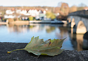 Henley, Oxfordshire. England General Views Henley Town  Fallen leaf , lodged on the stone paparpit of Henely Bridge.<br /> <br /> Thursday  01/12/2016<br /> © Peter SPURRIER<br /> LEICA CAMERA AG  LEICA Q (Typ 116)  f4  1/160sec  35mm  3.7MB