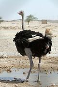 Ostrich farm.
