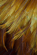 Golden feathers form an abstract design