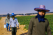 Dead Sea, moshav Neot Ha-Kikkar, 20km south of Ein Bokek, specializes in state-of-the-art desert agricultural technology. Today many immigrants from Thailand work here as laborers.