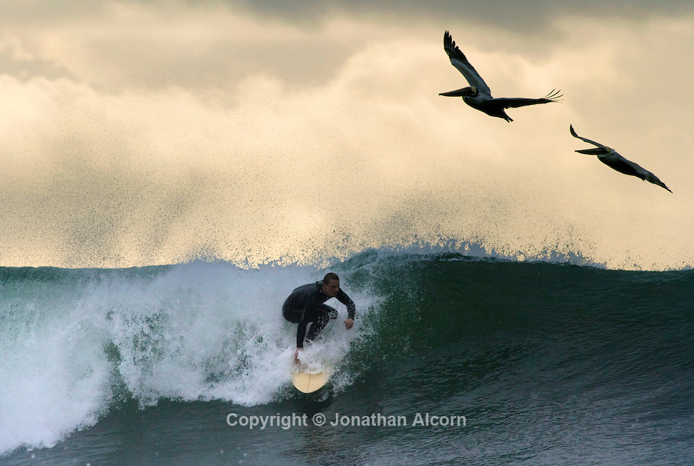 Pelicans catch the updraft from a wave ridden by a surfer as a rain storm begins clearing out at El Porto beach in El Segundo, California on January 23, 2012.©Jonathan Alcorn