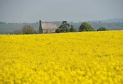 © Licensed to London News Pictures. 12/05/2016. Burythorpe, UK.  All Saints Church, Burythorpe, North Yorkshire beside a field of flowering oil seed rape as the sunny weather continues.  Photo credit: Anna Gowthorpe/LNP