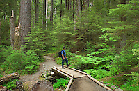 Trail Olympic National Park
