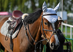 © London News Pictures. 12/05/2016. Windsor, UK. A horse wearing a bonnet on the first day of the 2016 Royal Windsor Horse Show, held in the grounds of Windsor Castle in Berkshire, England. The opening day of the event was cancelled due to heavy rain and waterlogged grounds. This years event is part of HRH Queen Elizabeth II's 90th birthday celebrations.  Photo credit: Ben Cawthra/LNP