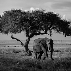 AFRICA IN MONOCHROME