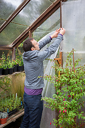 Putting up greenhouse insulation (bubblewrap)