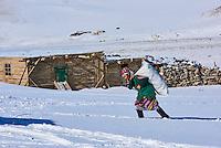 Mongolie, région de Bayan-Ulgii, transhumance d'hiver, portage du foin pour les animaux // Mongolia, Bayan-Ulgii province, winter transhumance