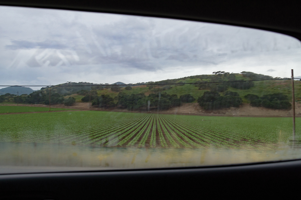 Image of produce growing in rows in a field on a farm on a cloudy day taken from a car passing by.