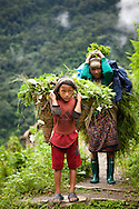 A portrait of a young Sherpa girl with her mother carrying baskets of leaves, Annapurna Sanctuary, Nepal