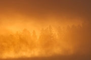 Fog at sunrise in the boreal forest<br />