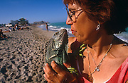 A lady and her pet green Iguanas stop walking along the surf in Miami Beach's coast for a moment to stand on the sand and kiss on the lips. Away from its proper habitat, this reptile looks comfortable in the hands of its affectionate mothering owner and in this warm climate. These exotic  lizards' live in tropical rainforests, in lower altitudes near water sources, such as rivers or streams. They spend most of their time high in the forest canopy, about 40-50 feet above the ground. Iguanas are diurnal, awake during the day. They are also cold-blooded, so they do not produce their own body heat, so need warm temperatures to thrive. Many people in the United States and elsewhere want a green iguana for a pet, so there is a big demand for their capture.