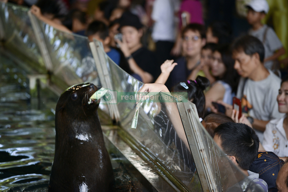 September 30, 2018 - Bangkok, Bangkok, Thailand - A seal show close to an aquarium glass as visitors gather for a closer look following a Seal show at Dusit Zoo in Bangkok, Thailand, 30 September 2018. Dusit Zoo is Thailand's first public zoo opened 80 years ago on 18 March 1938 located on a land under royal property will be closed at the end of 30 August 2018 with all animals being transferred to provincial zoos, before relocating them to a new zoo in Pathum Thani province. (Credit Image: © Anusak Laowilas/NurPhoto/ZUMA Press)