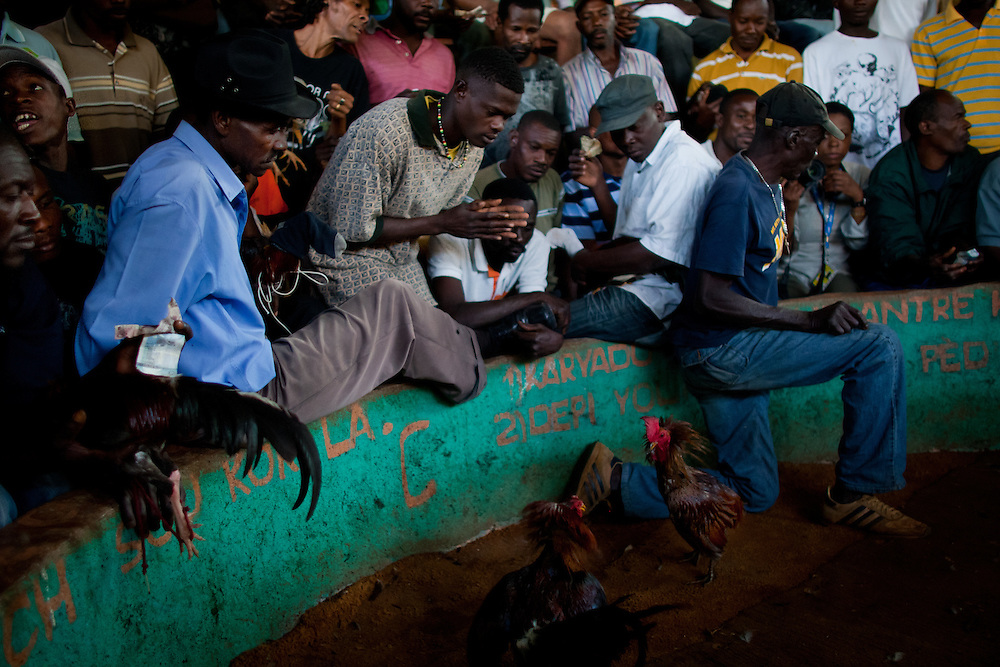 Spectators watch two roosters in the middle of the pit seconds before attacking each other.  <br /> <br /> Cockfighting or &quot;Cok Kages&quot; is Haiti's national passion.  Many argue that this sport serves as a form of entertainment and distraction where many could release their frustration and aggression in a safe arena.  The sport is legal in Haiti and less vicious since they don't attach blades to their feet. This event usually takes place on Sundays throughout Haiti.