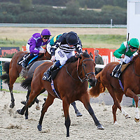 Lingfield 17th October 2012