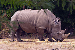 03 July 2006  A quick vacation through Iowa to Omaha.  Rhinocerous or rhino. (Photo by Alan Look)