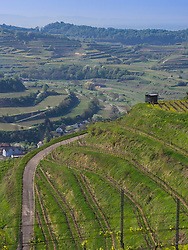 Scenic view of vineyard terraces and village of Oberbergen, Baden-Wuerttemberg, Germany