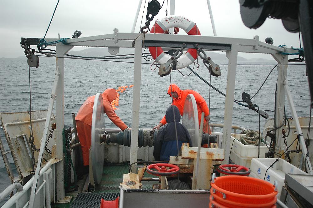 Fishing for Deep Water Shrimps (Pandalus borealis). Location : Norway