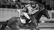 Karl Slezak rides Fernhill Wishes  during the Horseware Indoor Eventing challenge at The Royal Horse Show, TORONTO, CANADA.  November 4 2016