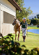 Handsome polo player holding his horses reins as they walk by stable and a lake on a sunny day.