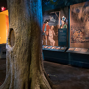 Thursday,  February 23, 2017, The Museum of the American Revolution  Here,  the Liberty Tree exhibit. ED HILLE . Staff Photographer
