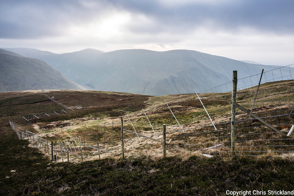 Deer fencing protects an area for tree planting managed by the Borders Forest Trust on Cairn Hill and Muckle Side overlooking Talla Reservoir.