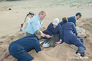 NOAA researchers restrain a captured Hawaiian monk seal, Monachus schauinslandi, Critically Endangered endemic species, while veterinarian Dr. Bob Braun takes a blood sample; west end of Molokai, Hawaii, photo taken under NOAA permit 10137-6, Ho ike a Maka Project