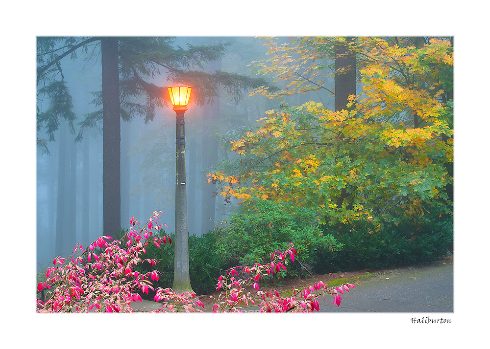 """Beautiful hand-crafted greeting cards made with the finest inks and professional matte paper.  All cards feature images of Mount Tabor Park, printed on Epson's Signature Worthy 100% cotton rag fine art paper.  Cards are standard size 5"""" x 7"""" and include mailing envelope.  Since each card is a fine art professional print, they can be mounted behind a standard matte with 5"""" x 7"""" opening and framed.  Available as a pack of 5 cards with envelopes (stamps not included)."""