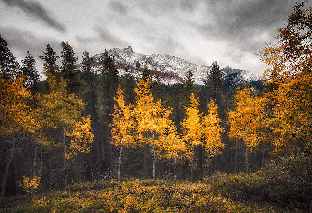 Fall in Sheep River Valley, Sept 2013