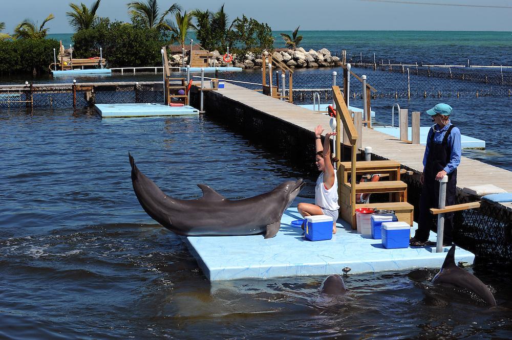 Dolphin Research Center auf Marathon, Florida Keys. ..Florida 2009..Foto © Stefan Falke.