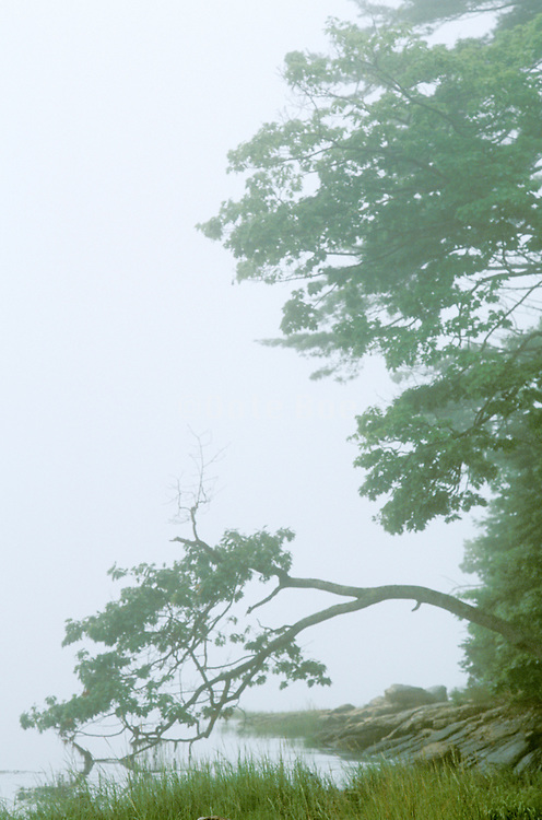 a foggy landscape with water and tree