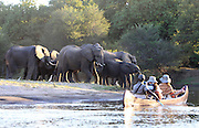 Travellers canoe past a herd of elephants on a channel off of the Zambezi river downstream through the Lower Zambezi National Park..Lower Zambezi National Park, Zambia, Southern Africa..© Zute & Demelza Lightfoot.www.lightfootphoto.com..