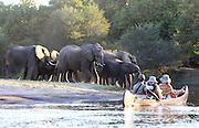 Travellers canoe past a herd of elephants on a channel off of the Zambezi river downstream through the Lower Zambezi National Park..Lower Zambezi National Park, Zambia, Southern Africa..© Zute & Demelza Lightfoot.www.lightfootphoto.com..