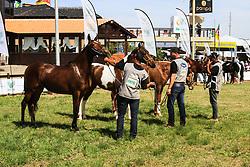 Julgamento da raça Mangalarga Marchador na 38ª Expointer, que ocorrerá entre 29 de agosto e 06 de setembro de 2015 no Parque de Exposições Assis Brasil, em Esteio. FOTO: Vilmar da Rosa/ Agência Preview