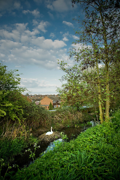 suburbia <br /> andy spain photographer<br /> asvisual <br /> swan stream trees