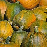 Massachusetts, Old Deerfield; Fall Harvest Pumpkins At Roadside Stand<br />