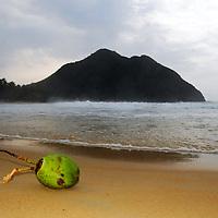 Coco en Playa Grande, Choroni, Edo. Aragua, Venezuela