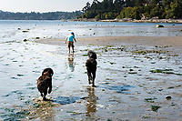 A young boy, 4, Jackson, and his father explore the tide pools and beach at Cordova Bay, in Victoria, BC, on a sunny summer day.