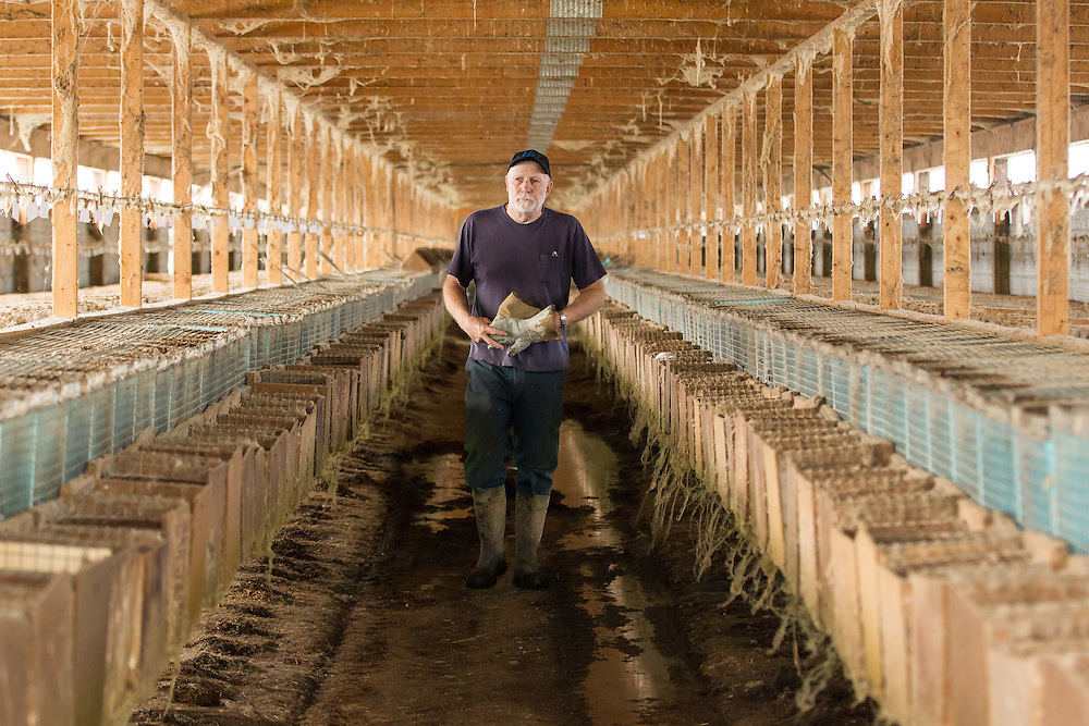Kirk Rankin of R B R Fur Farms Ltd  walks through one of his sheds at his mink farm near St. Mary's Ontario, Tuesday, August 4, 2015. Intruders broke into his property on July 7, 2015 and released over 6000 of Rankin's mink . Several other area fur producers have also experienced similar break ins.<br /> Farmers Forum/ Geoff Robins