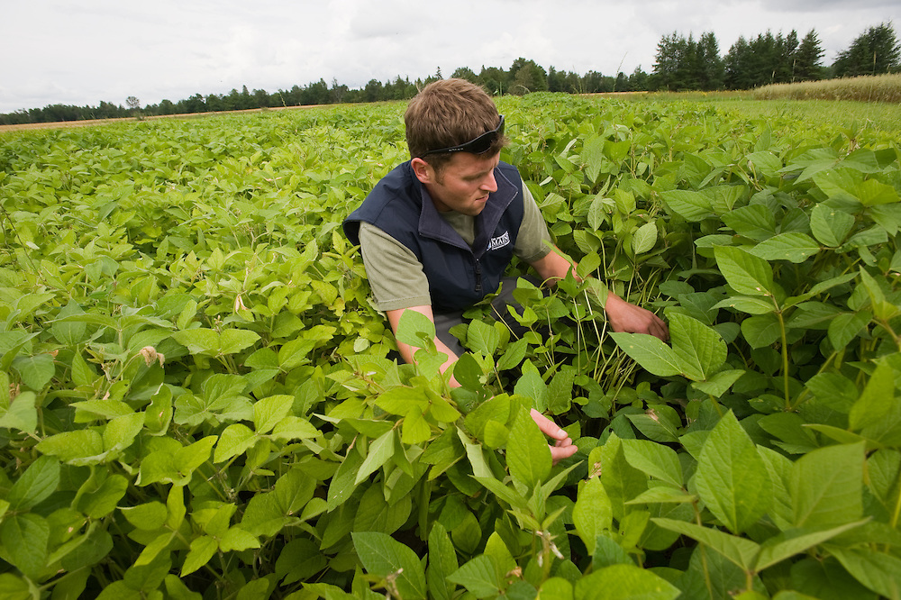 Researcher in the field testing small plot of plants in Maine