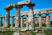 ITALY, GREEK CULTURE, Paestum; Basilica, Neptune Temple