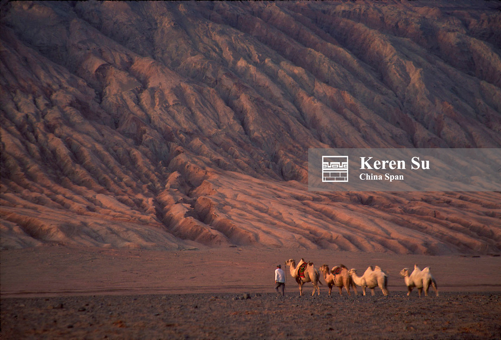 Camel caravan traveling under the Flaming Mountain on the Pamir Plateau along the Silk Road at sunset, around Turpan, Xinjiang Province, China