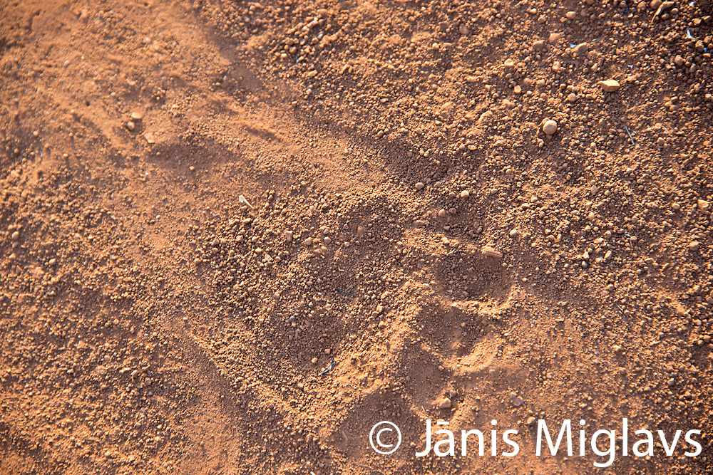 Footprint in Belle, a Mursi tribe village in Mago National Park, Omo Valley, Ethiopia, Africa.